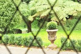 Ferns & Urns